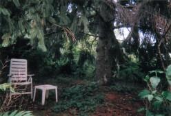 Under the grandmother pine