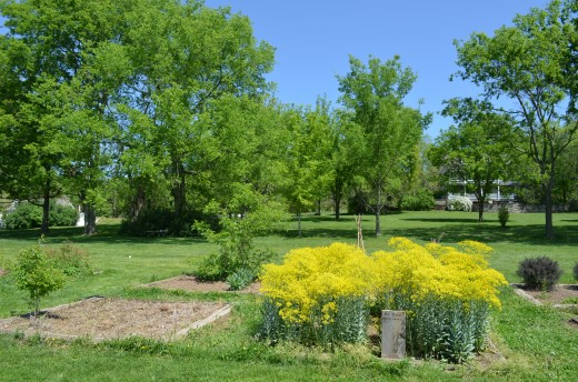 Picture of the herb gardens.  They included a dye garden, medicinal garden, and tea garden.