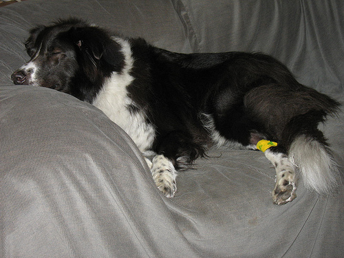 Fatigue after chemo treatment     (Flickr Image by dogsbylori)