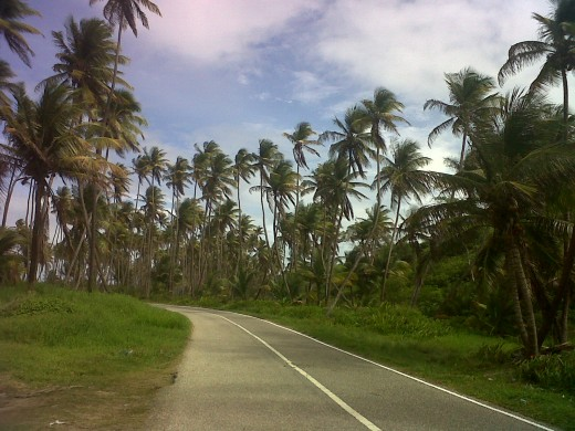 "Manzanilla Beach ""Eastern Trinidad"" both sides of the road outlined with coconut trees"