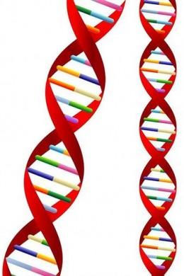 An example of a DNA molecule