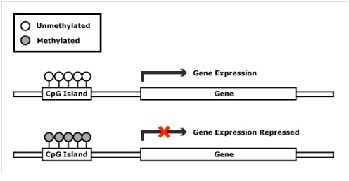 Example of Methylation  Click to make it bigger has I had to make this imagine small to fit on the Hub.