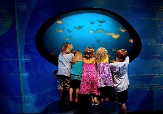 Discovery Place Aquarium In Charlotte North Carolina