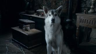 Nymeria, Arya Stark's dire wolf
