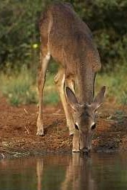 As the deer pants for the water so my soul longs for you Nashua. .