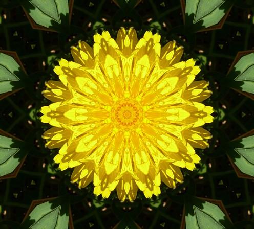 Kaleidoscope Dandelion