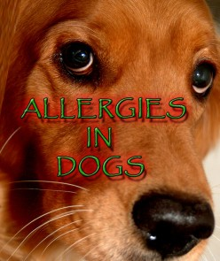 Does My Dog Have Allergies