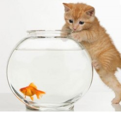 Do goldfish make good pets and is naming them going to far?