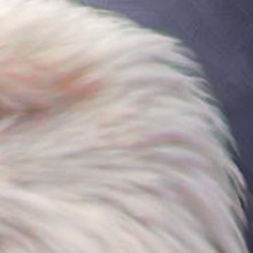 Close-up view of fine feathery edges.