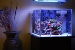 How to buy aquarium equipment without breaking the bank.