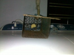 Mouse Trap with Spring Door Opened