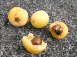 Fruit pits and seeds