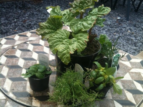 An assortment of herbs kept in our garden, ready for when we need them.