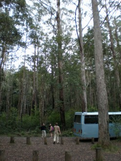 Nightcap National Park, near Byron Bay. New South Wales, Australia.