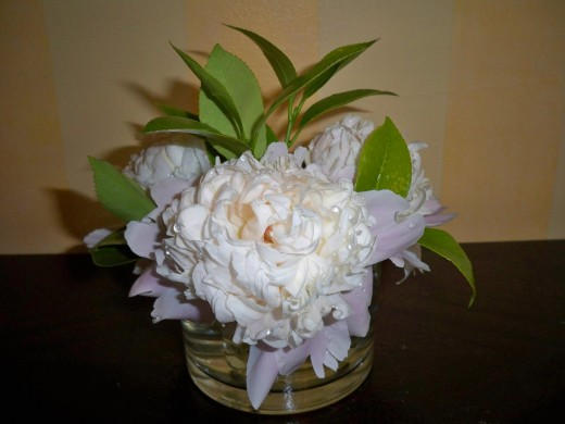 Three bedside peonies can fill a room with heady fragrance.