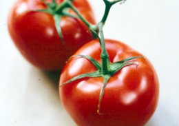Vine/Round Summer Tomato