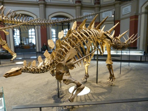 Kentrosaurus, Berlin Museum of Natural History