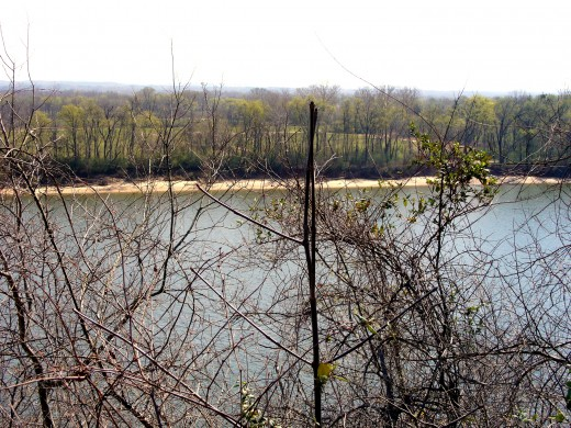 Photo 9 - The Tennessee River through trees.