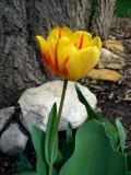 Spring Gardens - New Life