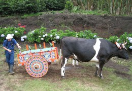 Colorfully-painted oxen carts are a celebrated style of traditional art in Costa Rica.