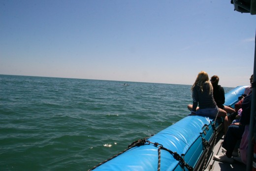 The small craft used by Blue Wave Adventures allows visitors to get close to the dolphins.