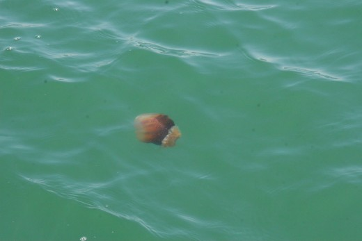 A jellyfish in the ocean, next to our boat.