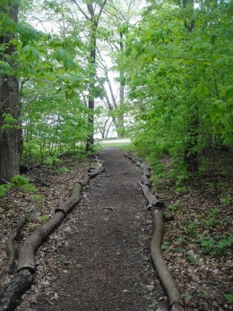 A walk in an urban forest to celebrate the Earth