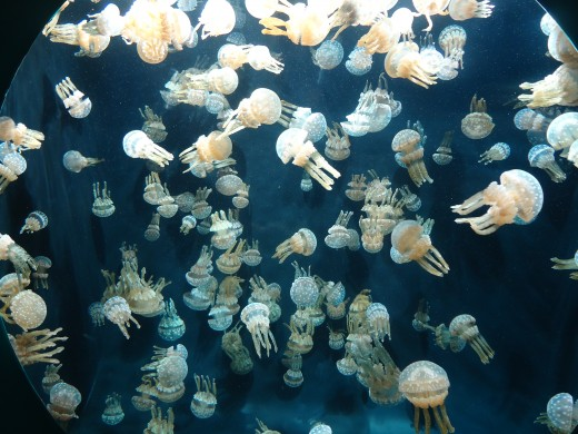 Just A Lot of Jellyfish