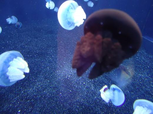 Blue/Purple Jellyfish
