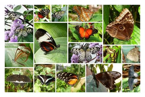 Butterfly Hubs