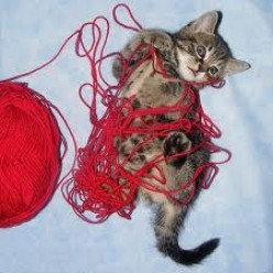 Cat and Twine