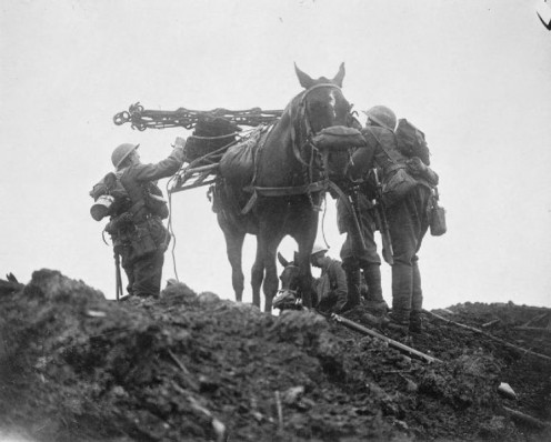 Battle of Pilckem Ridge (31 July - 2 August, 1917): A pack horse with his own gas mask being loaded with supplies.