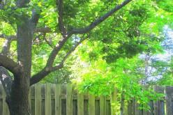 Haiku: Colors of Spring