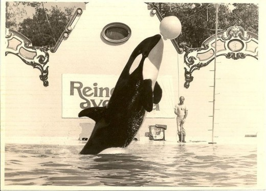 Keiko was separated from his family to entertain humans.