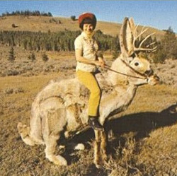 In warmer climes.  As you can see, jackalopes are a hard working bunch.  They deserve a nice gift at Christmas.