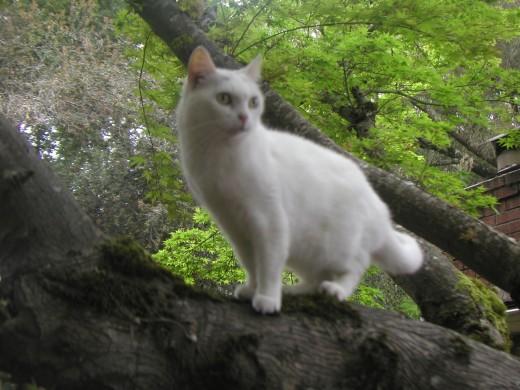 Little One in tree 4.15.12