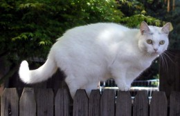 Little One on Fence 4.15.12