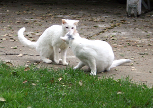Little One (l) and Pinky (r).  Pinky died of multiple inoperable liver shunts.