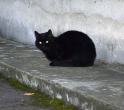 Why are people superstitious about cats?