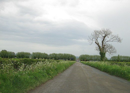 The approach to Slimbridge. In the spring, each roadside verge is awash with daffodils.