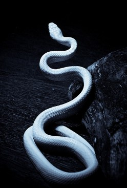 How to React to a Snake: how to prevent the bite and emergency snake bite treatments and tips