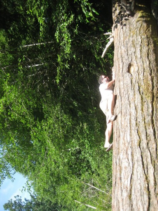Cathedral Trail, Vancouver Island, BC Ok, I cheated, this picture is rotated I'm not actually climbing a tree.