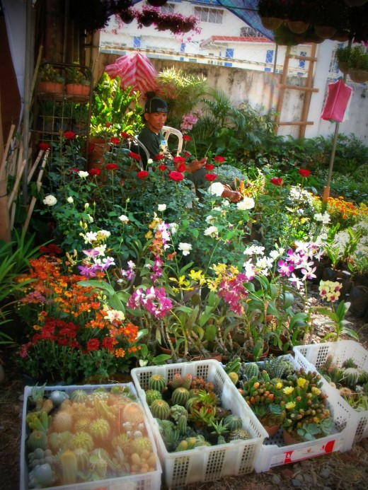 Flowers, cacti, and many more are also for sale..