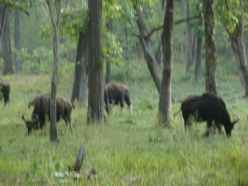 Tholpetty wildlife sanctuary