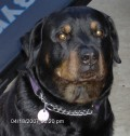 Munch'hund, deceased, but the best partner I had in years. He looked out for me.
