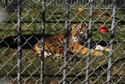 Tony the Truck Stop Tiger Controversy