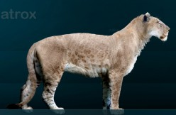 the American lion also competed with the first Georgians and other predators for the vast herds of game of the area.