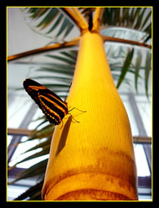 Live Butterfly Exhibit by o0o0oecho0o0o on Flickr
