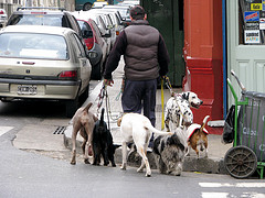Conducting a Participant Observation by becoming one of the subjects (a dog walker)
