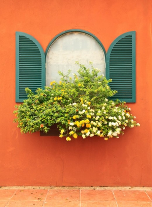 """Window and Flowers"""